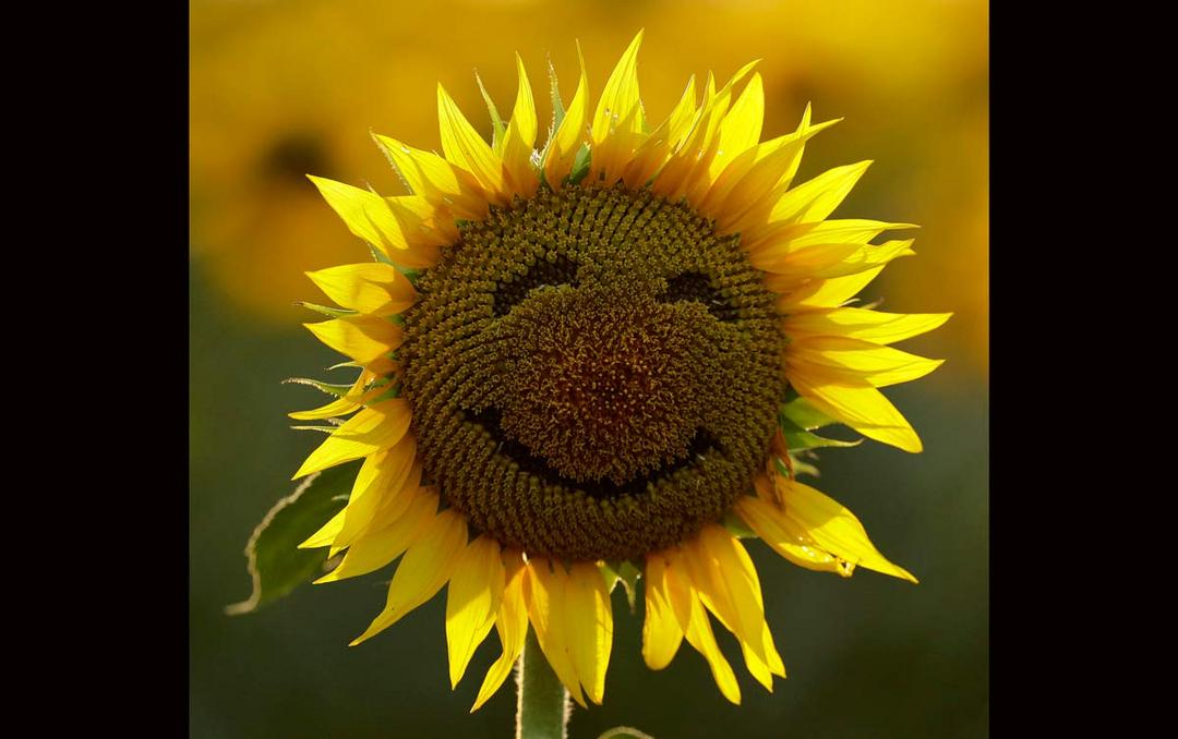 Usando a alegria para se conectar ao Terapeuta Interior