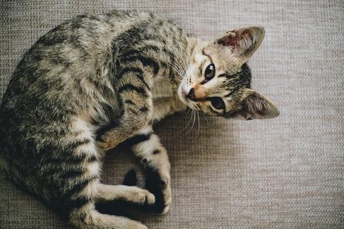 Cura de animal de estimação